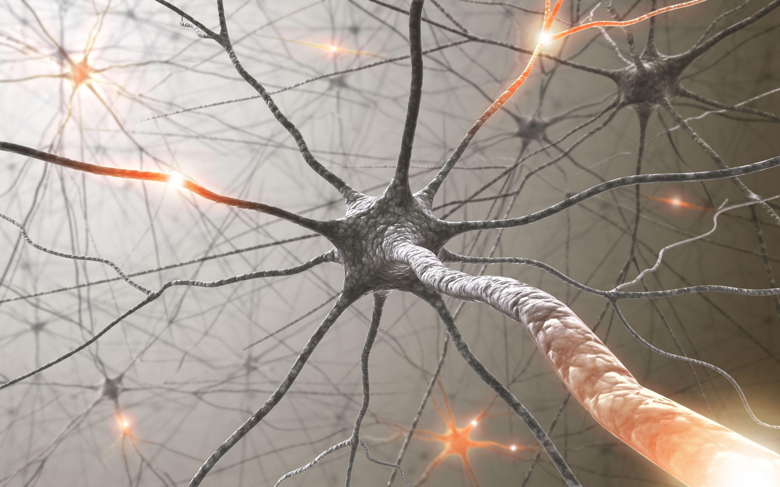 Neuro-Everything-Talk